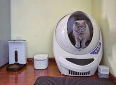 """""""留守宠物""""怎么过年?智能猫厕所销量暴涨26倍"""