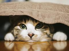 上门喂养宠物订单增长5倍 宠物放心寄养才是刚需