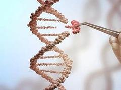 基因编辑食品,能否端上我们的餐桌?