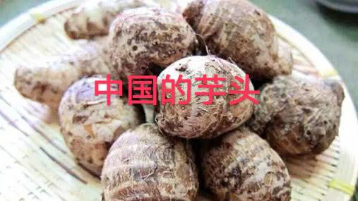 中国芋头小的可怜,印度芋头一根有一米长,网友:区别也太大了吧
