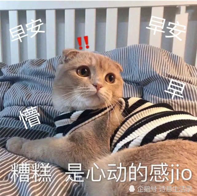 """""""早安+萌宠""""表情包:你超级无敌之极度乖巧的祖宗睡醒啦!"""