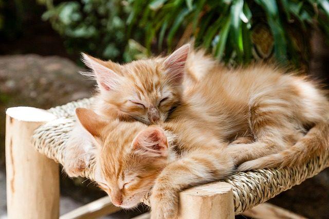 睡眠新国标:每天至少要睡7小时 睡眠不足的危害有哪些