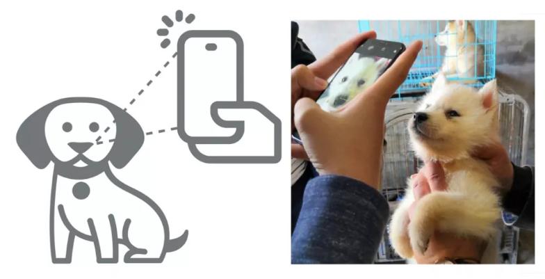 狗丢了?旷视推出AI鼻纹识别应用,狗也能进行身份识别了