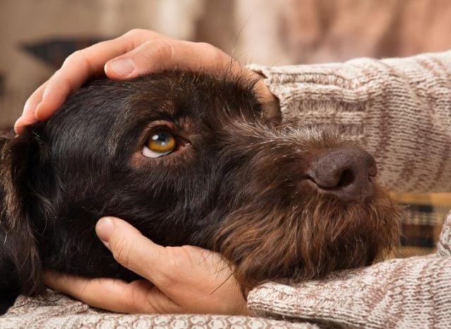 美国研究:撸猫撸狗有助减轻压力