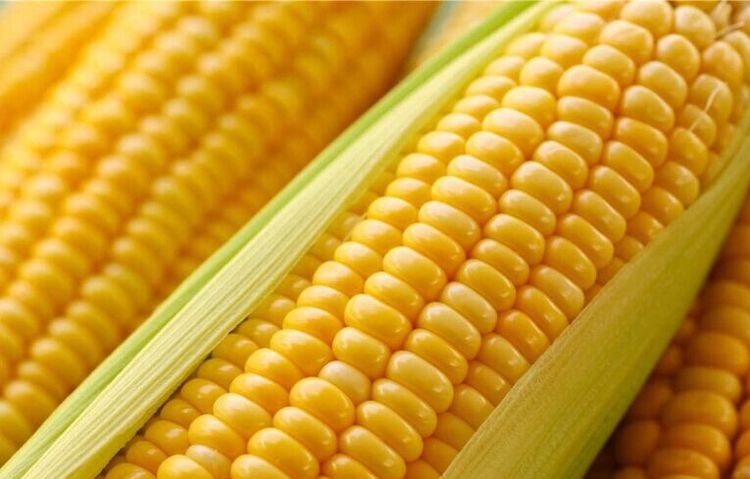 常吃玉米,好处多多,但切莫与一物同食,为了健康要早点了解!
