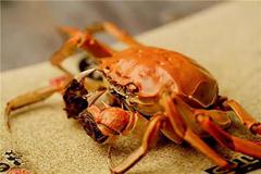 怀孕可以吃螃蟹吗,适当食用谨防流产
