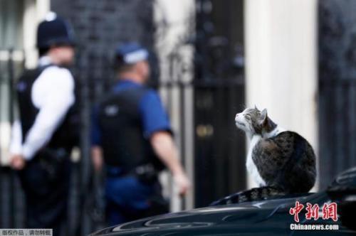 """英国唐宁街将易主,首相府""""御猫""""将何去何从?"""