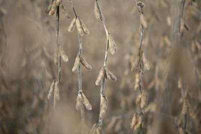 外媒:这个国家紧盯中国大豆市场