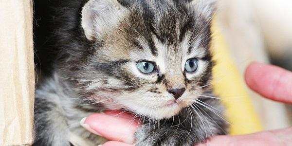 升级版《关爱流浪犬猫知识读本》发布!上海将构建救助流浪犬猫完整链路