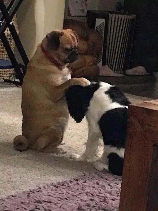 册封你为二狗