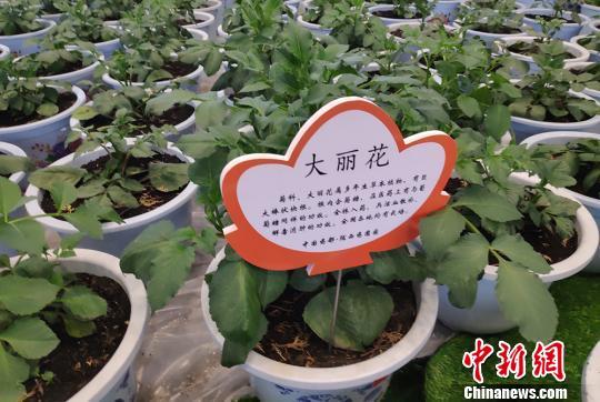 中国中药材主产区发布行业新标准 涉及6种道地药材