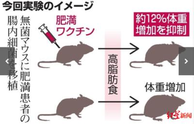 """日本研究人员找到""""抗肥胖疫苗""""?"""