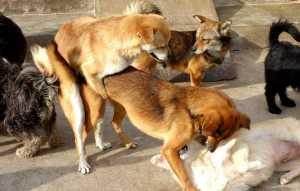 五种对人很忠诚的狗狗,第一种身世可怜,第四种面临灭绝