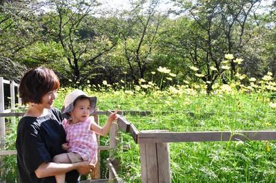 """奈良文殊院打造""""大波斯菊迷宫""""希望孩子们外出玩耍开启智慧"""