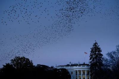 """特朗普""""求帮忙""""通话公开,举报人:白宫隐藏了敏感内容"""