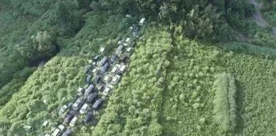 日本核泄漏7年,汽车已被植物被完全覆盖,就像是走进鬼城
