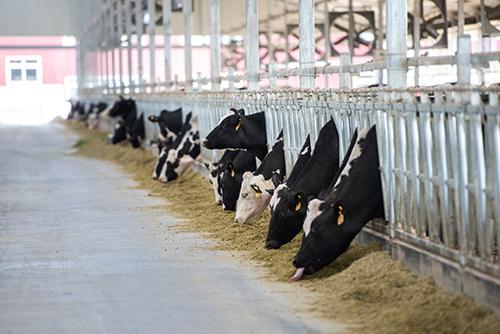 奶牛金钥匙技术示范蒙牛专场走进兴安盟