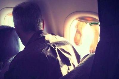 """""""飞洛杉矶的航班上,有乘客在机舱内晾晒袜子,网友:既无知又恶心"""""""
