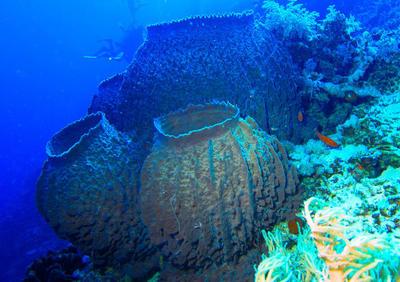 突破:俄从海绵生物中获新化合物 可杀死癌细胞