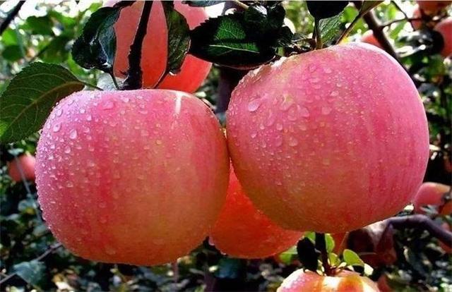 煮熟的苹果有哪些养生保健作用?营养师检索专业文献告诉你答案