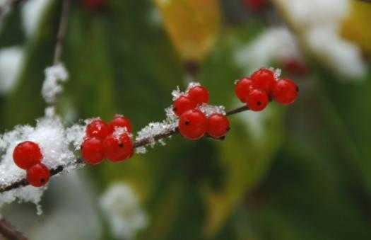 心理测试:3个雪中花,哪个最好看?测你最近会有什么大事发生?
