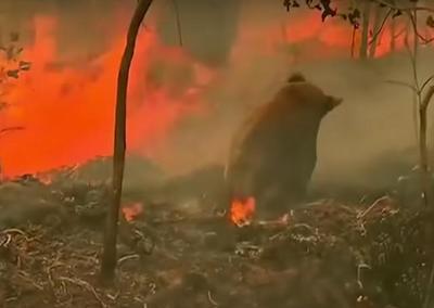 澳洲山火引发连锁反应!肉类蔬果供应告急,对中国有影响吗?