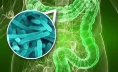 保持肠道微生态平衡是如何提高免疫力的