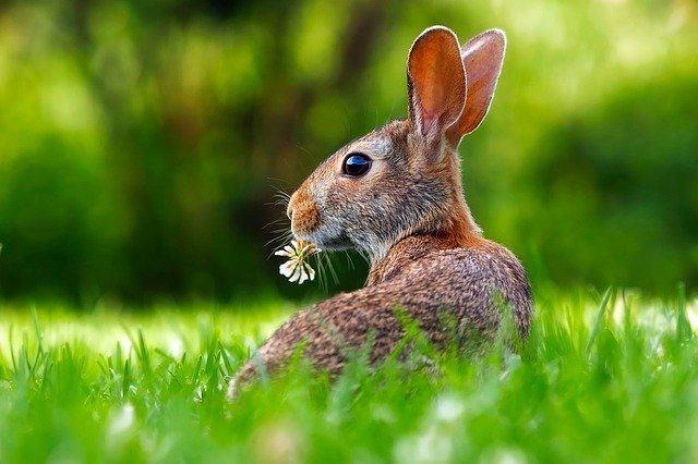 春天有哪些养生注意事项?早春养生五常识