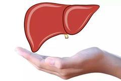 肝脏是人体唯一没有痛感神经的器官,最安全的酒精摄入量是0