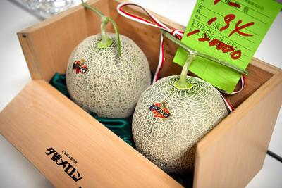 北海道旅游业受创夕张蜜瓜首次竞拍价格仅为去年的四十分之一