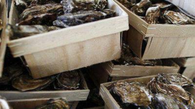 法国阿尔卡雄湾牡蛎受藻类污染,被禁销售!