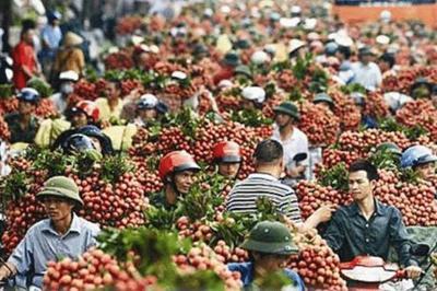 重磅消息!越南6466吨滞销荔枝被我国接收,网友:为啥不买国产货