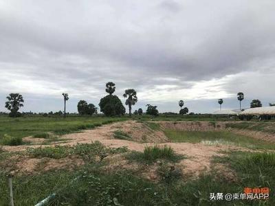 """3个月投资超200万,中国农场主在柬埔寨的""""野蛮生长"""""""