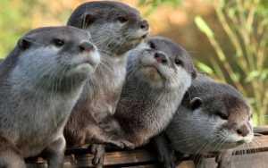 傻得可爱的动物,常常忘记自己在哪里,没有灭绝太神奇了