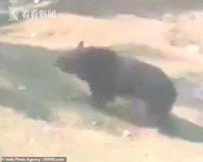 """印度55岁男子上班途中遭黑熊""""熊抱"""" 被严重抓伤"""