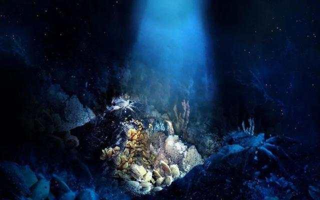 中国科学院院士:长寿基因的秘密或许就藏在深海里